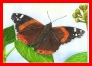 Red Admiral - Watercolours